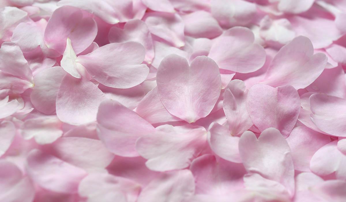 ピンクの花びらのフラワーシャワー