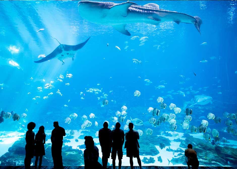 水族館の大きな水槽を眺める家族連れやカップル