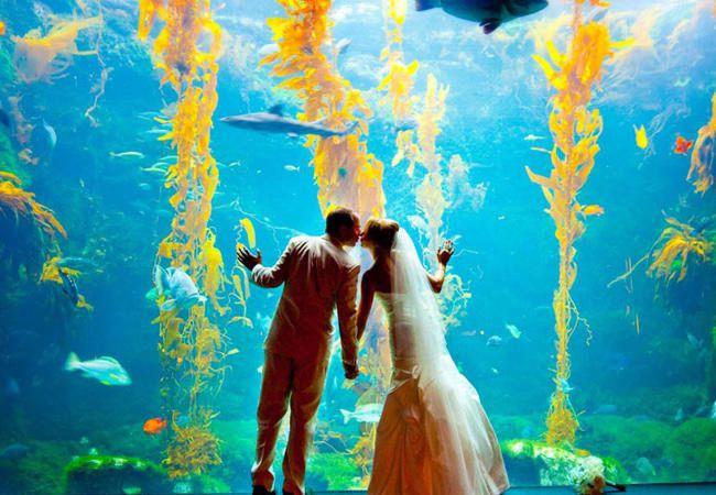 水族館結婚式