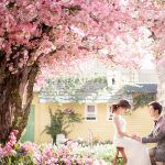 春爛漫な桜を演出に♡おしゃれで可憐な桜のウェディング演出6