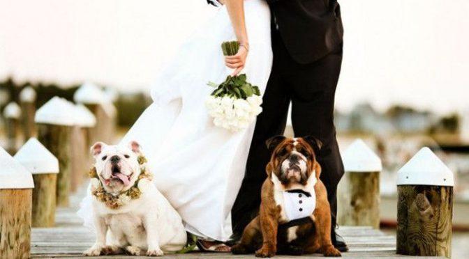 愛犬も大事な家族♡リングドッグとして結婚式に参加してもらおう♡