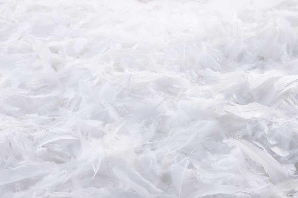 ホワイト羽根
