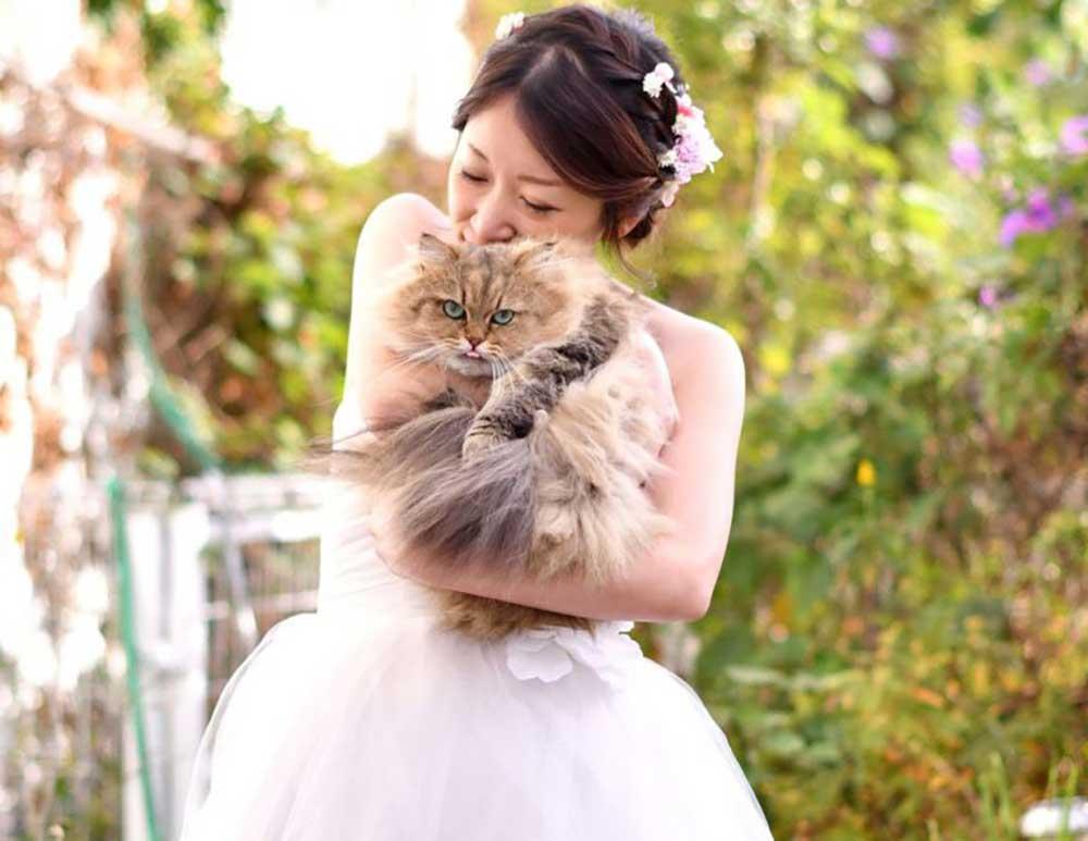 ねこと花嫁