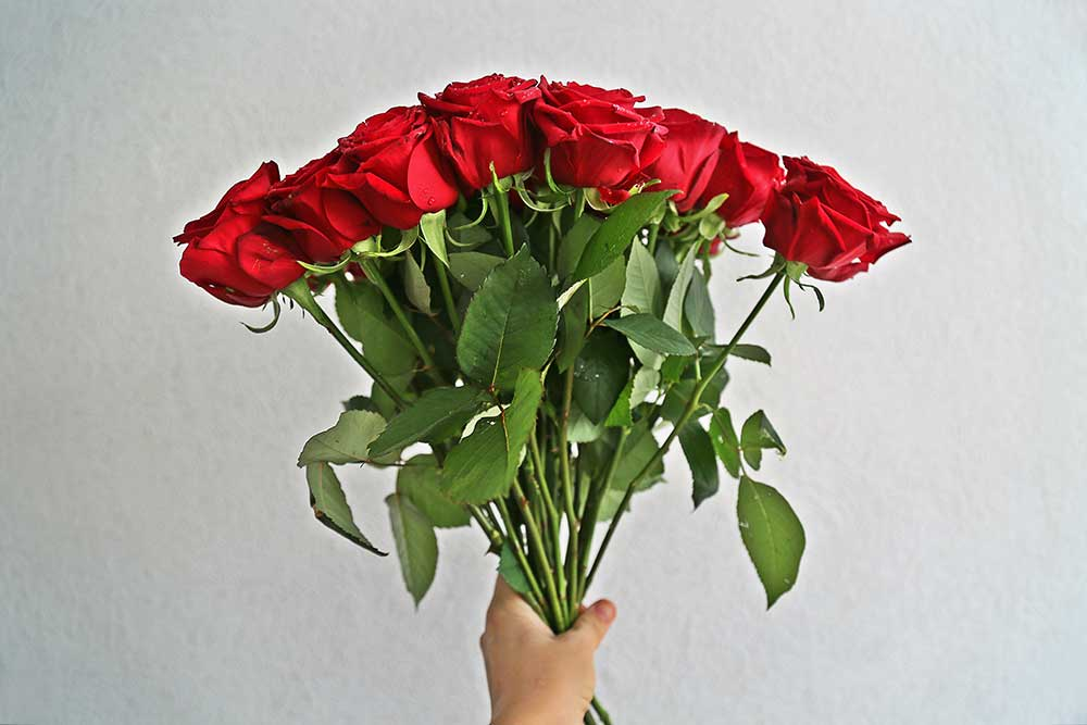 赤いバラを束ねたブーケを持つ手