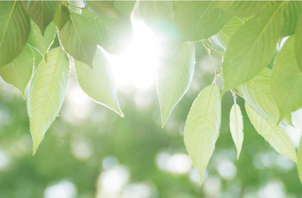 太陽の光が当たって光美しい緑の葉